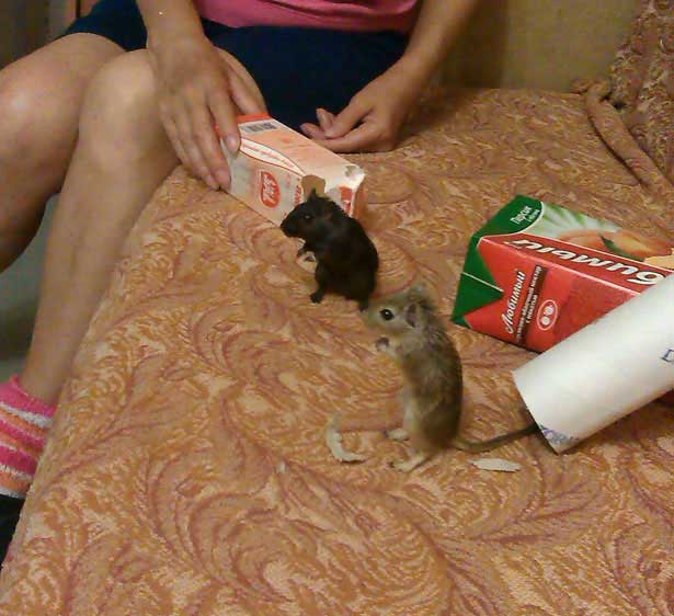 мышки не знают чем заняться