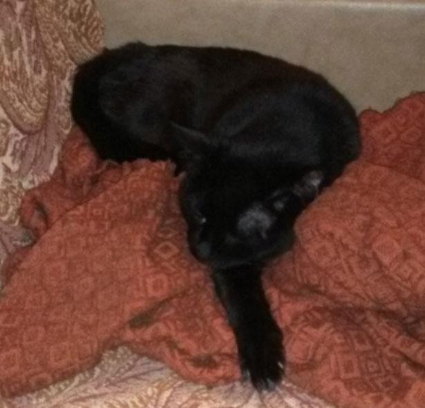 Кот устроился на одеяле