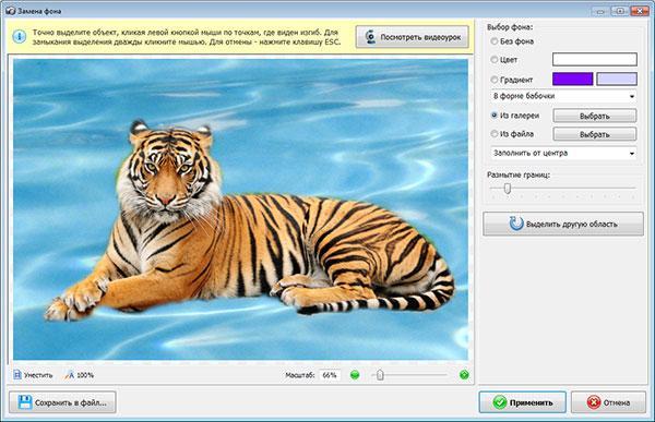 Тигр на синем фоте
